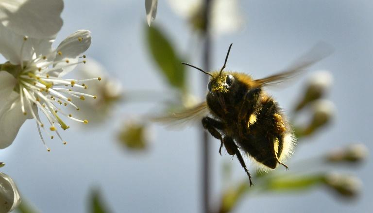 Bumblebees are struggling to adapt to global warming and are simply dying rather than migrating northward to cooler climes, says a study