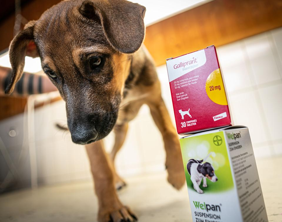 This illustration created on August 12, 2019 shows a dog standing next to animal medication produced by Elanco (top) and Bayer at a veterinary practice in Bad Nauheim near Frankfurt am Main, western Germany. - German chemical and pharmaceutical group Bayer said on August 20, 2019 it was selling its Animal Health business unit to US-based drug firm Elanco for $7.6 billion to create an industry giant. (Photo by Frank Rumpenhorst / dpa / AFP) / Germany OUT        (Photo credit should read FRANK RUMPENHORST/DPA/AFP via Getty Images)