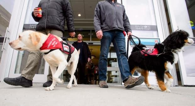 Veteran Ian Wadleigh (centre) walks his dog Mocha as they take part in a Canadian Veterans Service Dog training session at a mall in Ottawa on Tuesday, March 6, 2018. (Sean Kilpatrick/The Canadian Press - image credit)