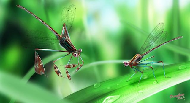 Damselfly flirting