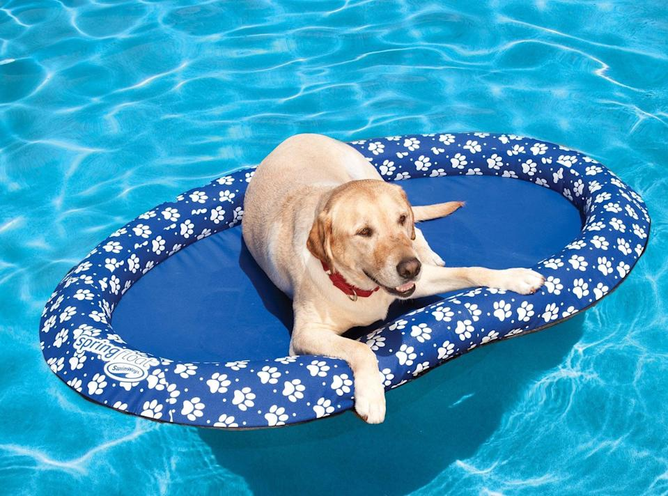 <p>Even the dog deserves a little Summer fun, so get this <span>SwimWays Paddle Paws Dog Float</span> ($49).</p>
