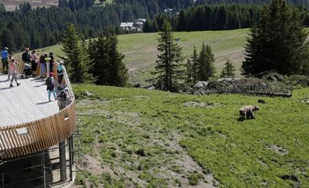 Visitors look at bear Napa at the Arosa Baerenland sanctuary in the mountain resort of  Arosa