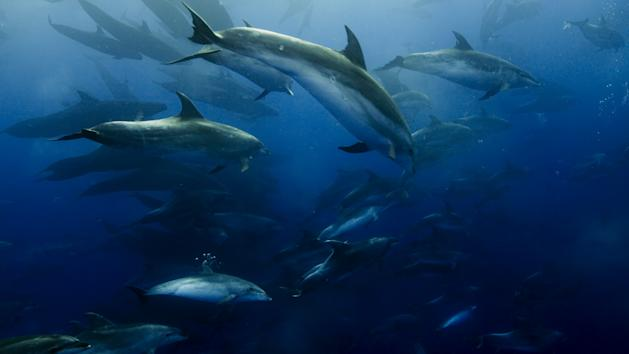 Netflix Dives Into Multi-Year Overall Deal With 'Blue Planet