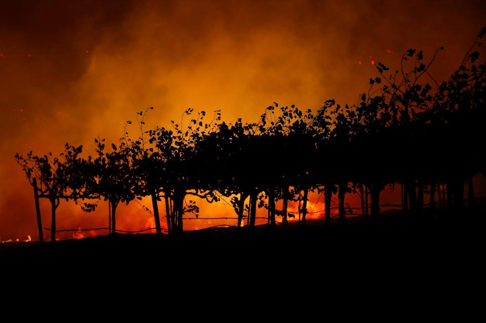 Vines are silhouetted against the Kincade fire burning in a valley below, near Geyserville, California, U.S., October 24, 2019. (Photo: Stephen Lam/Reuters)