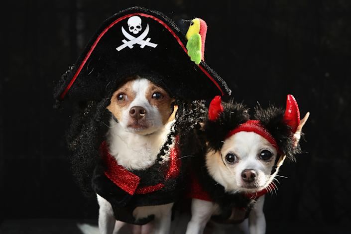 Little, a chihuahua, and Pants pose as a pirate and a devil at the Tompkins Square Halloween Dog Parade. (Photo by John Moore/Getty Images)