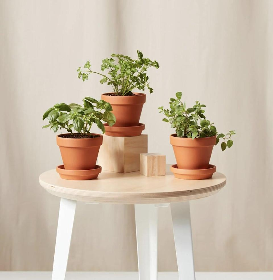 <p>For a long-distance loved one, consider sending this <span>Savory Herbs Collection</span> ($65) from Bloomscape, which includes basil, parsley, and oregano.</p>