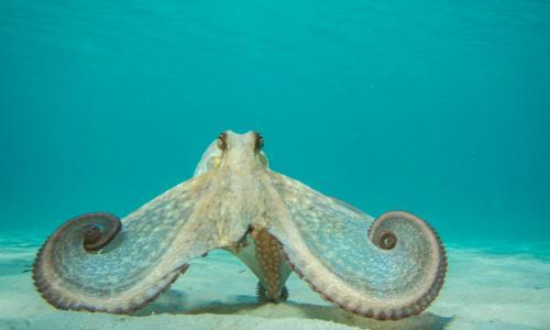 An octopus 'love story' on Netflix has caused thoughts to run wild. Why?