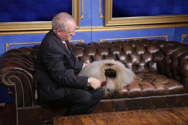 PHOTO: David Fitzpatrick and Wasabi the Pekingese appear on 'Good Morning America' after winning Best in Show at the American Kennel Club National Championship. (ABC News)