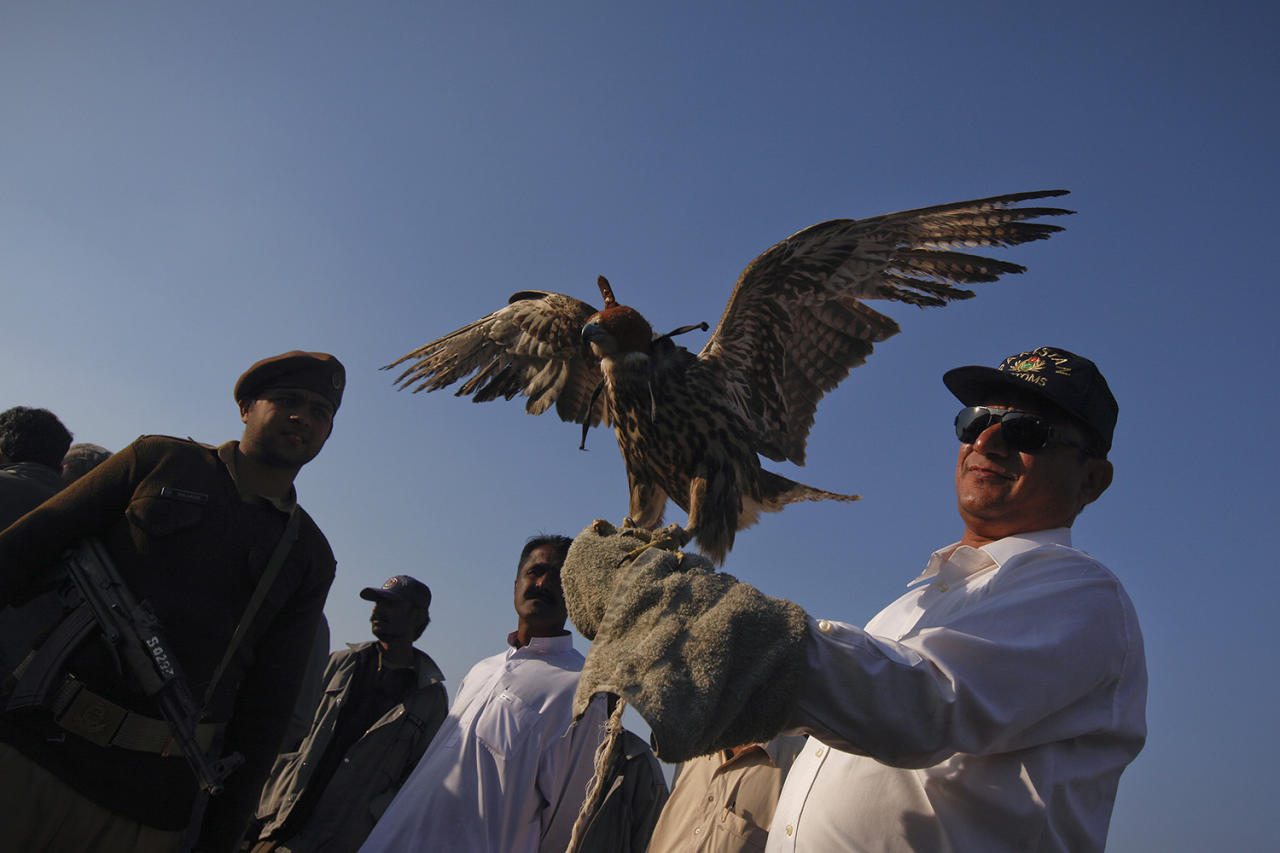<p>A Pakistan Customs official releases a falcon in the Kirthar National Park, some 50 kilometers (31 miles) from Karachi January 24, 2013. Tari Mahmood, Senior Preventive Officer of Pakistan Preventive Customs, said that the customs and the Sindh Wildlife department have released six falcons that were seized during a raid in Karachi two months earlier. (Photo: Akhtar Soomro/Reuters) </p>