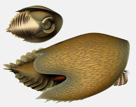 Handout photo of an artist's reconstruction of the marine creature Cambroraster falcatus