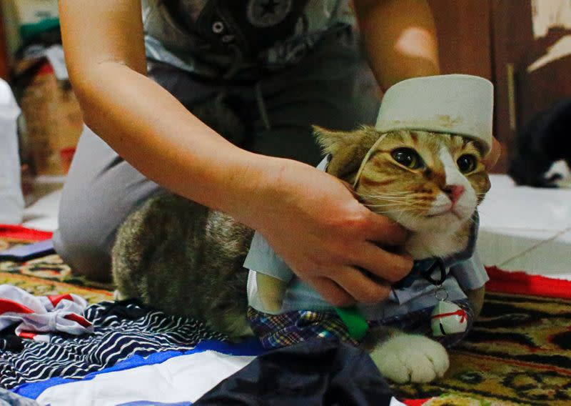 A cat is dressed in a cosplay costume in Jakarta
