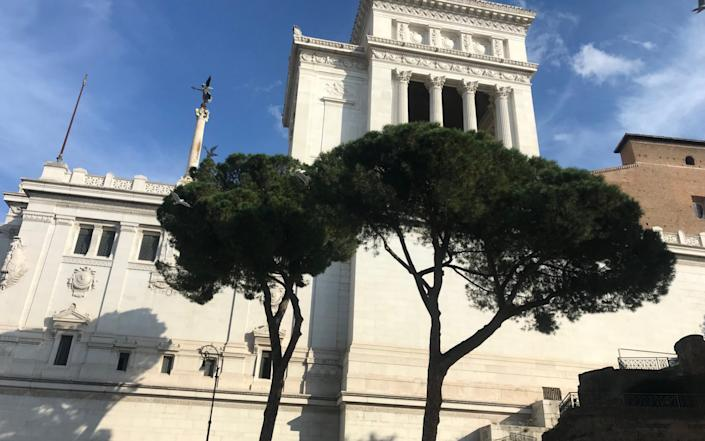 Healthy umbrella pines in front of the Vittoriano monument in Piazza Venezia in central Rome - Nick Squires