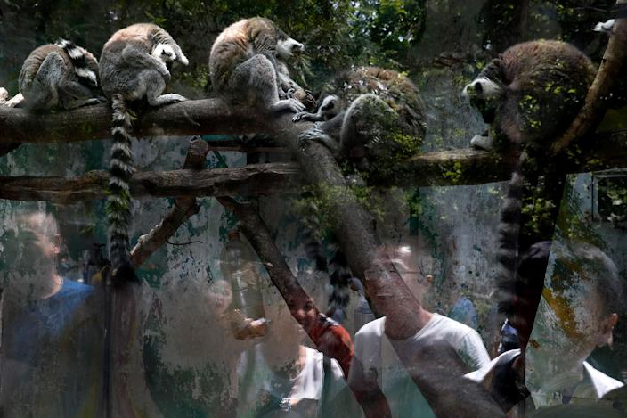 <p>Visitors are reflected on the protective glass as they watch the ring-tailed lemurs at a zoo on the May Day holiday in Beijing, Monday, May 1, 2017. Millions of Chinese are taking advantage of the May Day holidays to visit popular tourist sites. (AP Photo/Andy Wong) </p>