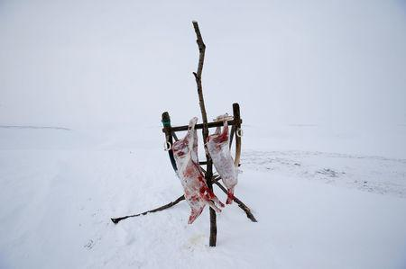 """Pieces of reindeer meat hang at a reindeer camping ground owned by the agricultural cooperative organisation """"Erv"""", about 250 km north of Naryan-Mar, in Nenets Autonomous District, Russia, March 8, 2018. REUTERS/Sergei Karpukhin"""