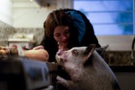 """Luciana Benetti, 16, feeds her pet pig Chanchi, given to her as a birthday gift the previous year amid the COVID-19 pandemic in Buenos Aires, Argentina, Saturday, Sept. 4, 2021. """"One day my legs gave way and he came running. He grabbed my hair and raised my head,"""" she said. She had been taking online classes at home, unable to see friends or schoolmates. """"I didn't feel well. I was dizzy because I couldn't leave."""" (AP Photo/Natacha Pisarenko)"""