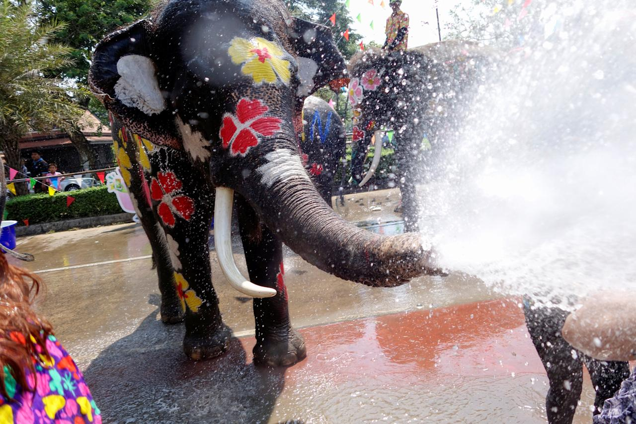 <p>An elephant sprays water to people during the celebration of Songkran Water Festival, to commemorate Thailand's New Year in Ayutthaya, Thailand April 11, 2018. REUTERS/Jorge Silva </p>