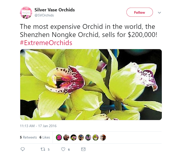 orchtwit