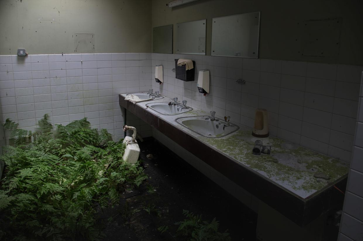 Plants grow in an abandoned young offenders institute in Northern Ireland, March 12, 2018. (Photo: Unseen Decay/Mercury Press/Caters News)