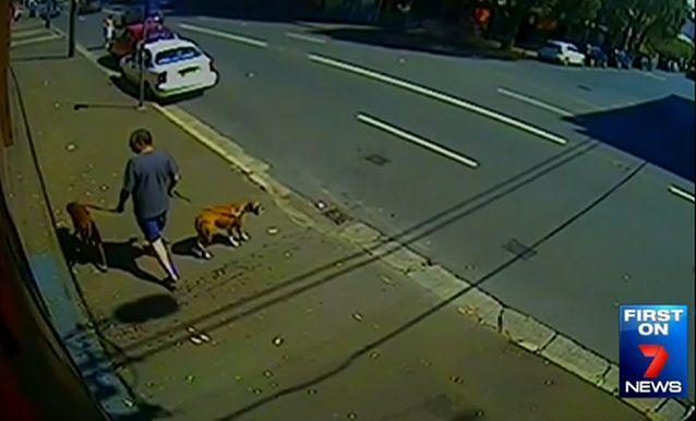 Victim Karl Nissen walked his two dogs on a Saturday morning in September 2014, unaware of the danger that was to come. Photo: 7 News