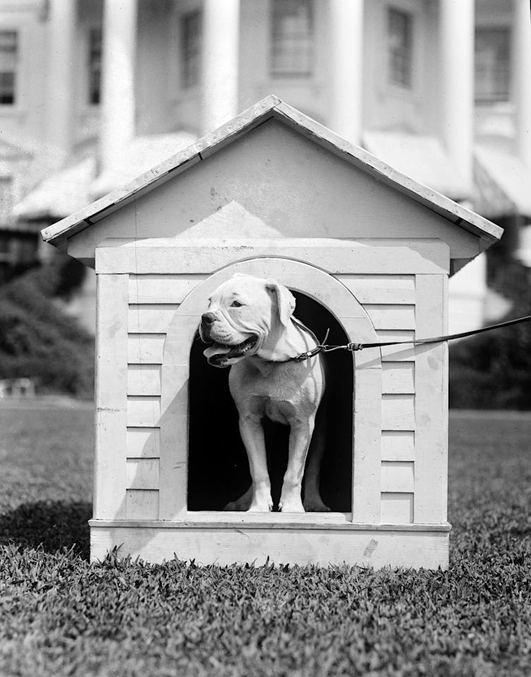 O'Boy, the pet dog belonging to first lady Florence Harding, stands in his doghouse on the White House grounds in 1921. (AP Photo/Library of Congress)