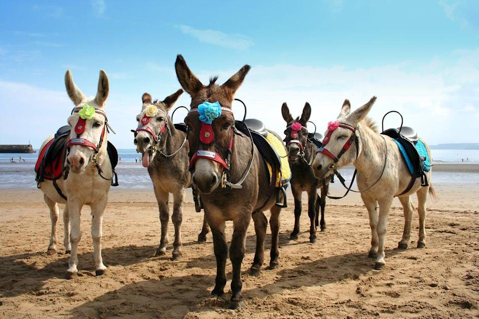 Donkey rides are on offer in Scarborough (Getty Images/iStockphoto)