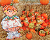"""<p><strong>Petaluma, California</strong></p><p>You can pick a pumpkin while snacking on homemade pumpkin ice cream at the adorable <a href=""""https://www.springhillcheese.com/pumpkin-patch"""" rel=""""nofollow noopener"""" target=""""_blank"""" data-ylk=""""slk:The Great Peter Pumpkin Patch"""" class=""""link rapid-noclick-resp""""><strong>The Great Peter Pumpkin Patch</strong></a> in northern California. Dig your own potatoes, and of course, taste the creamery's food. The best part? Admission is free for everyone. Organic cheeses ($10) and ice cream ($3-$5) will be sure to delight. Dogs (on leashes) welcome!<br></p>"""
