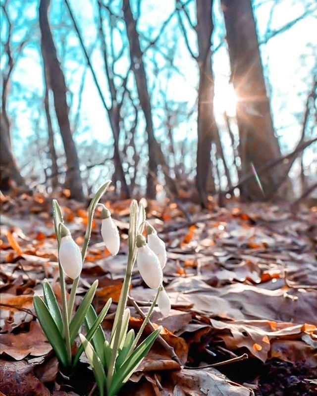 """<p>The early morning light frames a tranquil scene as winter turns to spring and the first snowdrops bloom in Slovakia.</p><p><a href=""""https://www.instagram.com/p/B96kAuUAhSP/?utm_source=ig_web_copy_link"""">See the original post on Instagram</a></p>"""