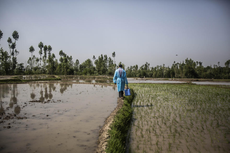 A health worker crosses a paddy field during a vaccination drive against COVID-19 in Minnar village, north of Srinagar, Indian controlled Kashmir, Thursday, June 10, 2021. (AP Photo/Mukhtar Khan)