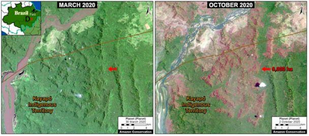 PHOTO: Over 50,000 acres of forest were lost in the Brazilian Amazon. In this satellite imagery of Para state, 9,000 hectares burned between March, left, and October, right, 2020.  (Photo by Planet/MAAP)