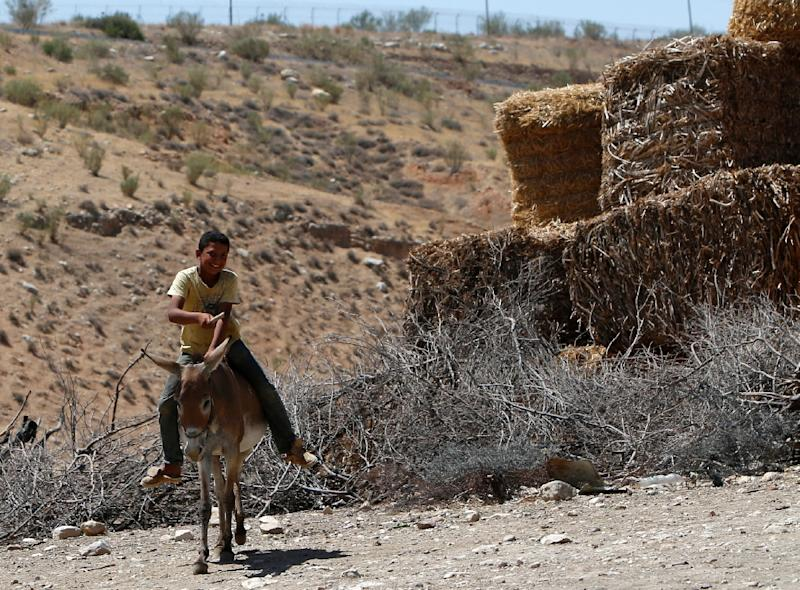 A Palestinian boy rides a donkey in the Israeli-occupied West Bank area of Tubas (AFP Photo/Jaafar Ashtiyeh)