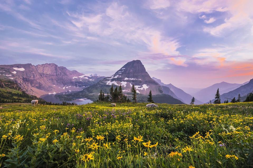 """<p><a href=""""https://www.visitmt.com/glacier.html"""" rel=""""nofollow noopener"""" target=""""_blank"""" data-ylk=""""slk:Glacier National Park"""" class=""""link rapid-noclick-resp"""">Glacier National Park</a> is one of the most impressive national parks in the United States, which fairytale alpine meadows full of wildflowers, forests full of towering trees, a rugged mountain view, and clear lakes. There is so much to see, with plenty of hiking trails and campsite spots to explore. It's the best of Montana's wilderness and makes for perfect camping. </p>"""