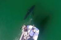 Marine biologists from Cal State Long Beach Shark Lab study sharks along the California coast
