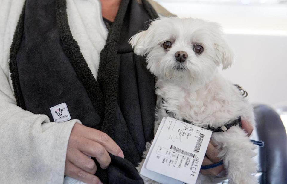 Pet travel is set to become even more complicated: Getty Images