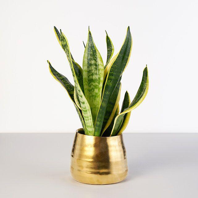 "<strong><h3>The Bouqs Co.</h3></strong><br>This already blossoming destination for on-demand floral arrangements just debuted an entirely new and enviable plant section. The leafy green offerings range from gardenias to air plants and assortments of tiny succulents complete with trendy ceramic pots — a.k.a. the ideal apartment accessory or a sweet gift for a fabulous friend.<br><br><em>Visit <a href=""https://bouqs.com/plants/all"" rel=""nofollow noopener"" target=""_blank"" data-ylk=""slk:The Bouqs Co"" class=""link rapid-noclick-resp"">The Bouqs Co</a>.</em>"