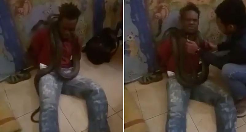 Indonesian police in Papua use snake to interrogate suspect