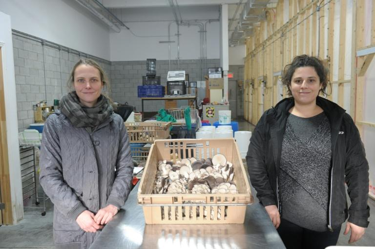 Lysiane Roy Maheu (L) and Dominique Lynch-Gauthier sell one kilo of mushrooms is sold to restaurant owners for US$19, including delivery
