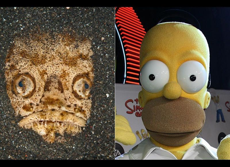 LEFT: The Stargazer fish which bears an uncanny resemblance to Homer Simpson. (Caters News / Getty Images)