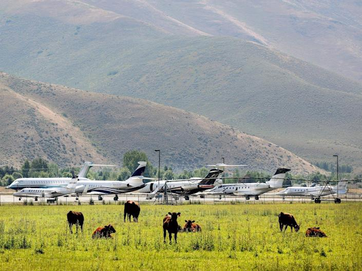Private jets in Sun Valley alongside cows grazing with mountains in the background