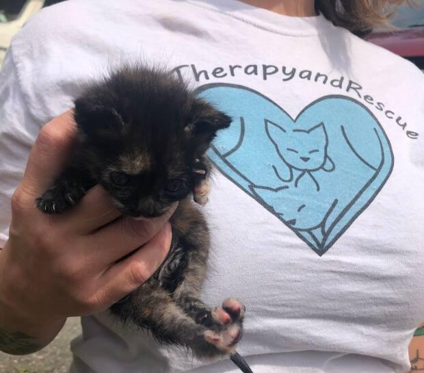 A volunteer with the Cat Therapy and Rescue Society holds one of the kittens that the organization helped relocate on Friday. (Submitted by Melina Csontos - image credit)