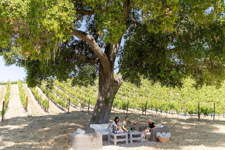 A picnic in the vines at Booker Vineyard