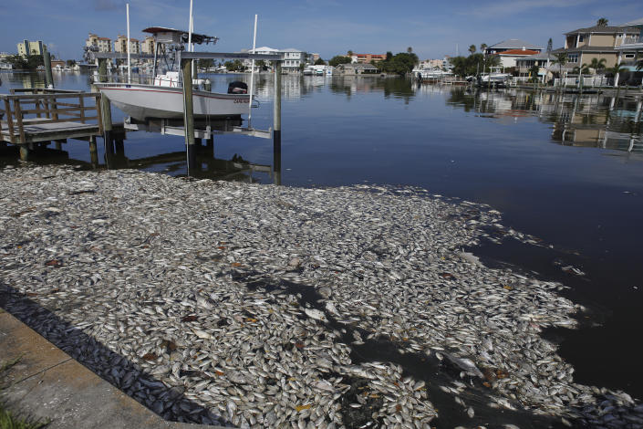 Thousands of dead fish