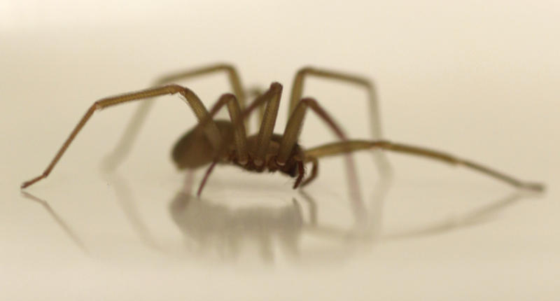 Tennessee apartment filled with venomous spiders