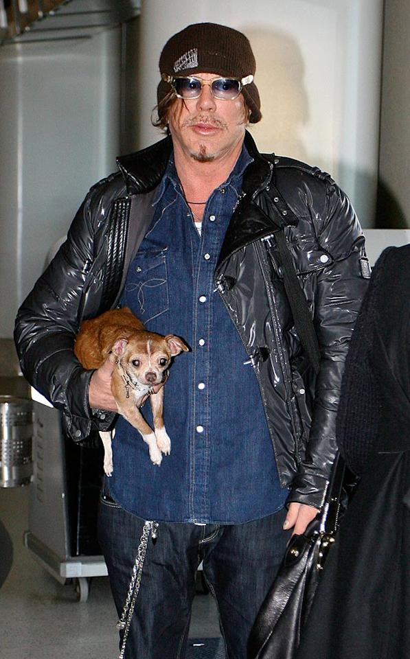 """Mickey Rourke arrived at LAX with his pet chihuahua on Thursday. The Golden Globe winner thanked his dogs during his Best Actor acceptance speech a few nights earlier. Hot Shots Worldwide/<a href=""""http://www.splashnewsonline.com"""" target=""""new"""">Splash News</a> - January 15, 2009"""