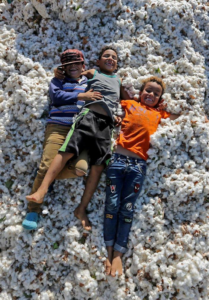 Children play on top of cotton bolls.