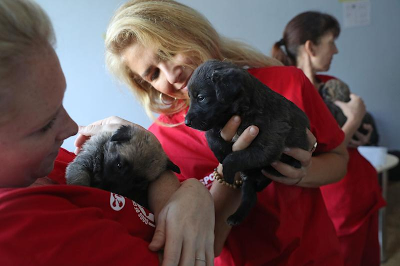 Meredith Ayan (L), executive director of SPCA International, a U.S.-based animal rescue nonprofit, SPCA program director Lori Kalef (C) and volunteer Kerry Anne O'Connor cuddle with stray puppies at a makeshift veterinary clinic operated by the Dogs of Chernobyl initiative inside the Chernobyl exclusion zone on August 17, 2017.