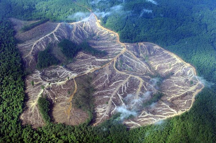 Cutting rainforests down provides a double threat to the environment: it removes a vital sink for planet-warming gases in our atmosphere and produces more carbon dioxide, methane and nitrous oxide used and expelled by industrial-scale agriculture (AFP Photo/ROMEO GACAD)