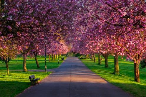 """<span class=""""attribution""""><a class=""""link rapid-noclick-resp"""" href=""""https://www.shutterstock.com/image-photo/avenue-cheery-blossom-trees-pittencrieff-park-1715159545"""" rel=""""nofollow noopener"""" target=""""_blank"""" data-ylk=""""slk:Cliff Hands/Shutterstock"""">Cliff Hands/Shutterstock</a></span>"""