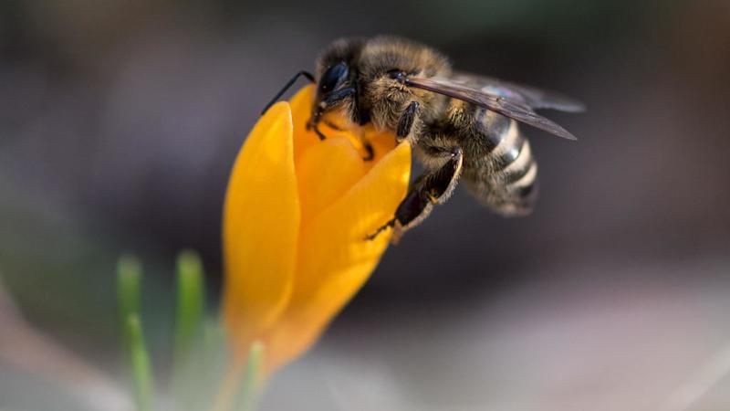 Honeybees' venom holds out hope of aggressive breast cancer treatment - study