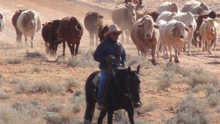 Cattle station rebuilds after crippling drought