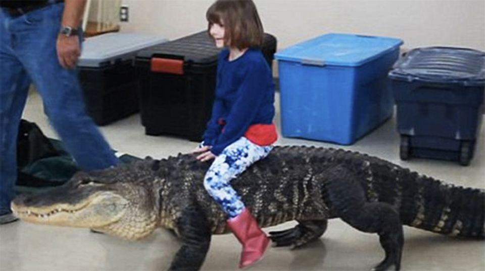 The girl apparently rode on top of a 2.4m alligator at a children's birthday party. Source: Viral Nova